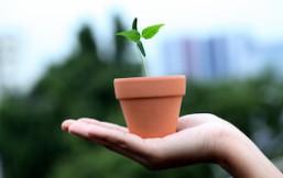 7 ideas semilla para vida saludable